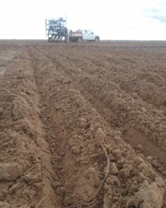 in-furrow trials